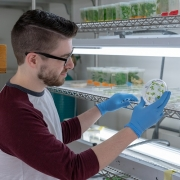 Kevin Hines examines cultured plant cells